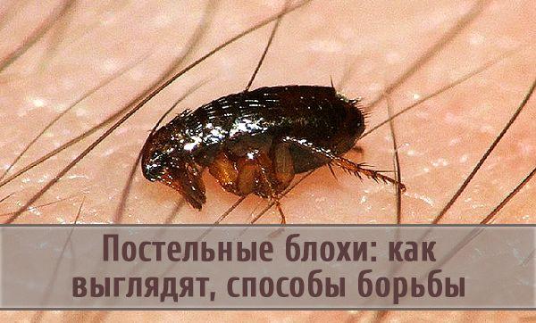 как вывести глистов и паразитов из организма