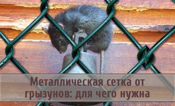 Советы по защите от грызунов с помощью металлической сетки