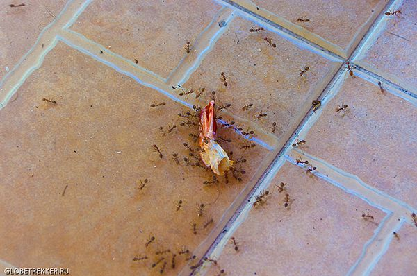 Пищевой мусор может привести к появлению муравьёв