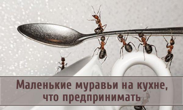 Что предпринять, если на кухне появились маленькие муравьи