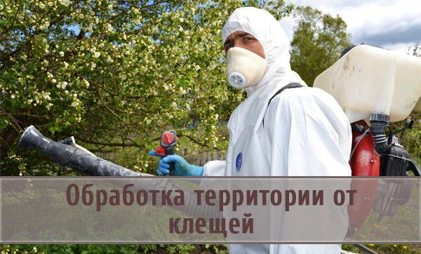 Правила обработки территорий от клещей и средства борьбы с паразитами