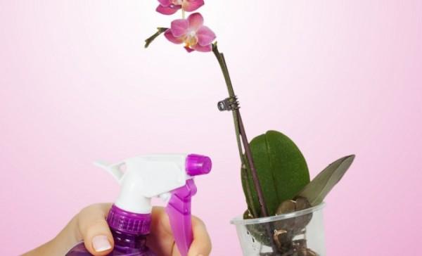 Обработка орхидеи от тли