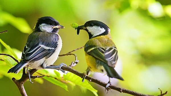 Птицы так же очень любят пообедать тлёй