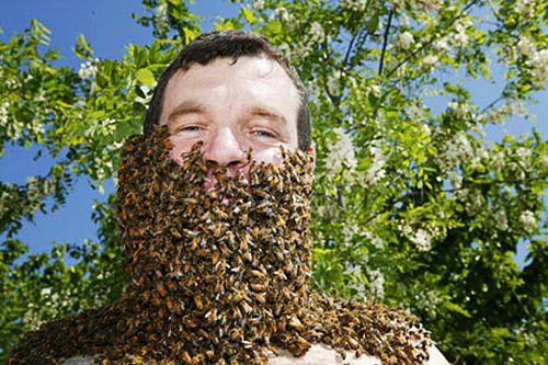 Человек, который не боится укусов пчёл