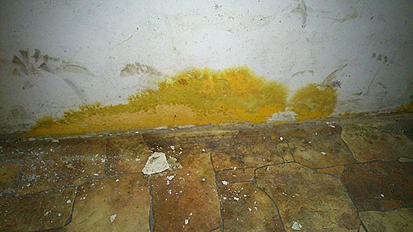 Жёлтая плесень на стене