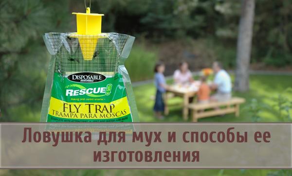 Как самостоятельно изготовить ловушки для уничтожения мух