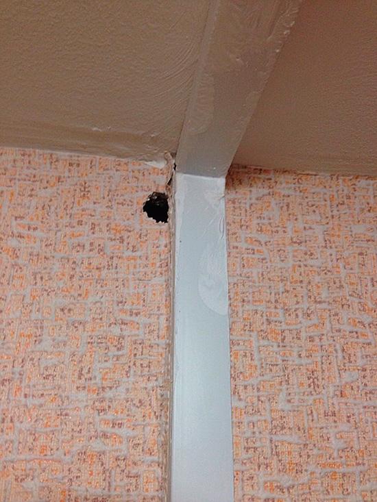 В жилых домах грызуны приносят много вреда и могут мигрировать между квартирами