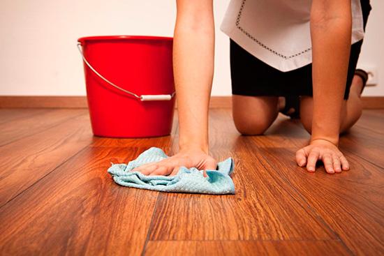 Регулярная уборка поможет предотвратить или хотя бы вовремя заметить поселившихся «соседей»