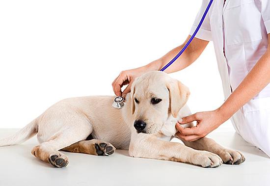 Животное, которое стало проявлять признаки болезни, нужно быстро показать ветеринару