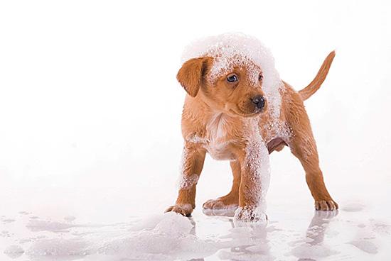 Не используйте шампуни для животных после обработки средством