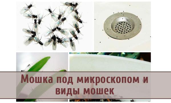 Чем вредны мошки, как с ними бороться дома и виды мошек