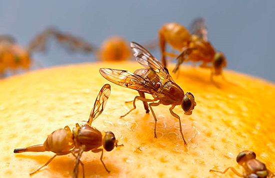 Главный метод предотвращения появления насекомых – не оставлять съедобных для них продуктов