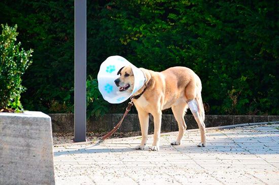 Стресс может появиться у собаки, попавшей в непривычную ситуацию, например, при лечении
