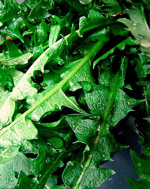 Можно сделать настой из листьев одуванчика