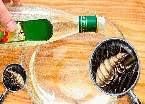 Домашние рецепты помогут избавиться от паразитов