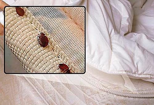 Мелкие паразиты с трудом обнаруживаются в постельном белье