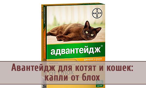 Адвантейдж – мощное средство против блох для кошек и котят