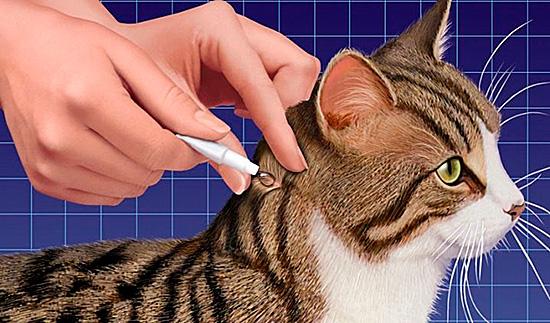 Пример нанесения препарата на кожу животного