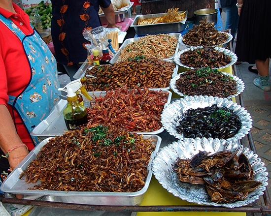 В некоторых странах крупное насекомое употребляют в пищу