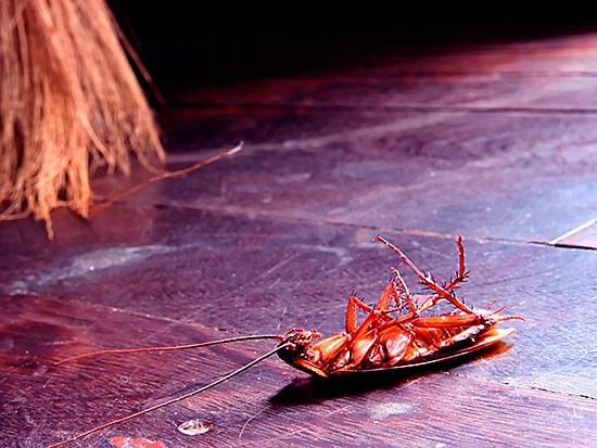Средство оказывает на насекомых паралитическое действие