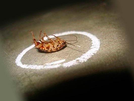 Карандаш от тараканов наносят во все места возможного их обитания