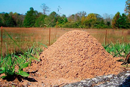 Муравейник выглядит как небольшая кучка земли, но имеет внутри глубокие ходы