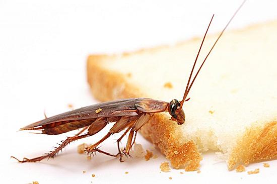 Вы же не хотите, чтобы неприятнейшие насекомые пробовали вашу еду?