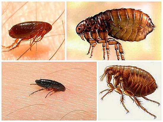 Разные виды насекомых – одна проблема