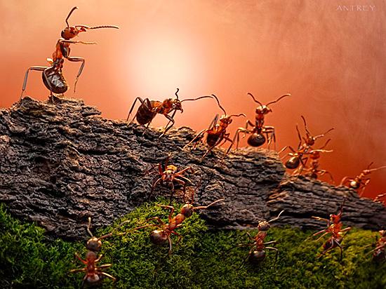 У насекомых существует разделение на касты