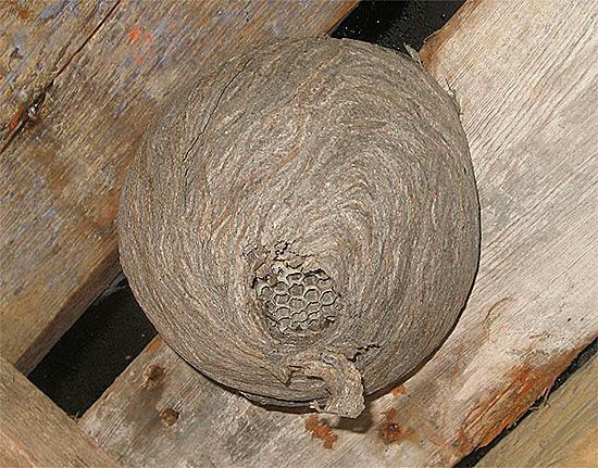 В деревянном здании нельзя пытаться сжечь осиное гнездо