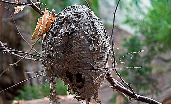 Гнездо, где уже не живут насекомые