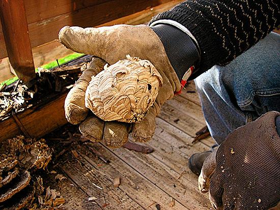При борьбе с насекомыми нужно надеть несколько толстых кофт и перчатки, чтобы не получить укусов