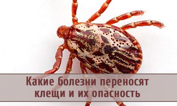 Самые опасные заболевания, которые переносят клещи