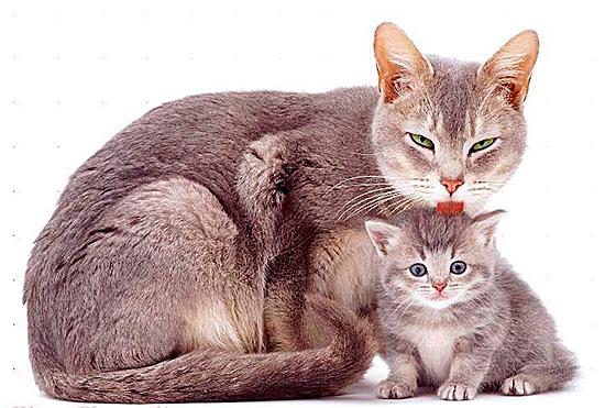 Капли используют для котят, уже отлученных от матери, чтобы она не могла слизать препарат