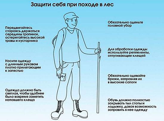 Простые методы защиты позволят предотвратить опасный укус