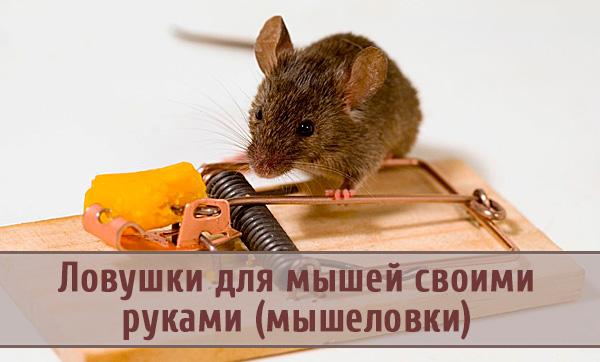 Какие ловушки для мышей эффективны?