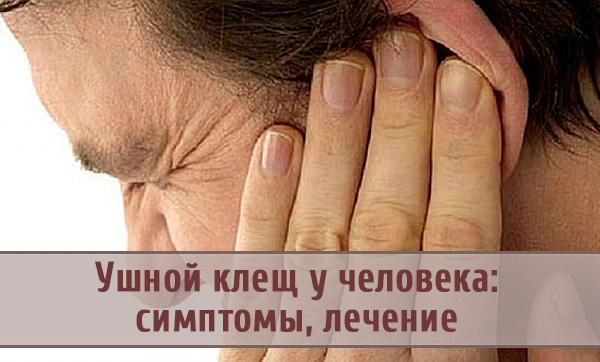 Ушной клещ у человека: причины и лечение