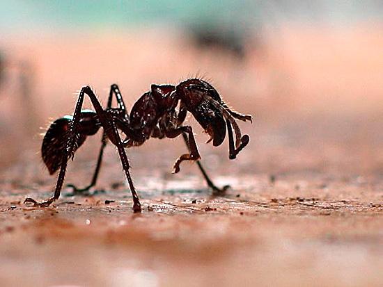 Некоторые разновидности этих насекомых очень опасны – их укусы вызывают аллергическую реакцию