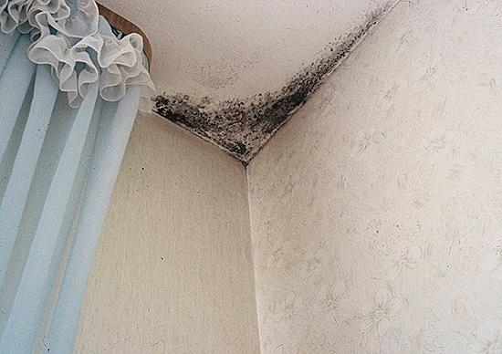 Гипсокартонные стены и потолки – в зоне риска по плесневению