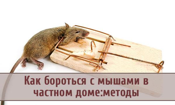 Как эффективно бороться с мышами в частном доме: надежные методы
