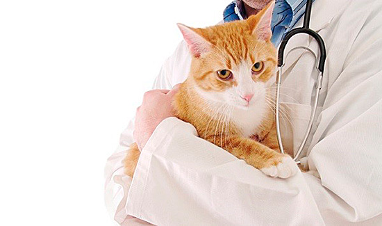 Случаи, когда обратиться к врачу нужно немедленно, – высокая чувствительность и аллергия