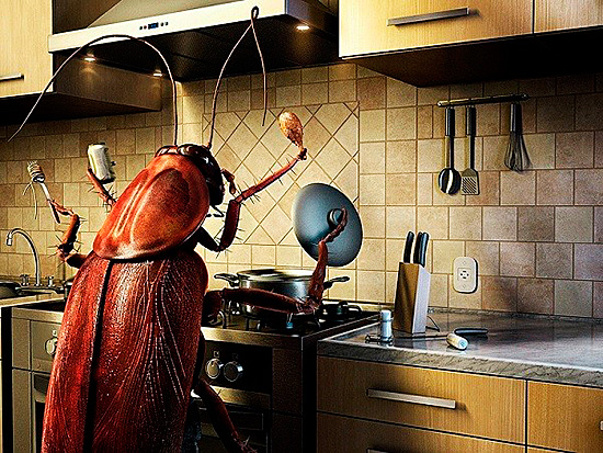Не позволяйте насекомым хозяйничать на вашей кухне