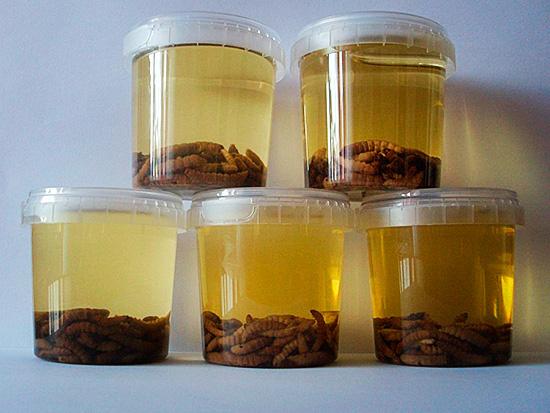 Так выглядит подготовленная настойка на личинках пчелиной моли