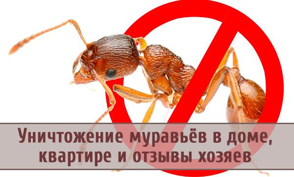 Избавляемся от вредителей: как уничтожить муравьев