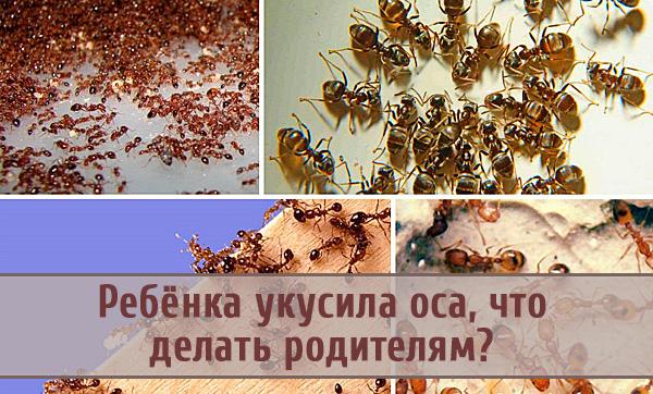 Варианты эффективных средств от муравьев в квартире и доме