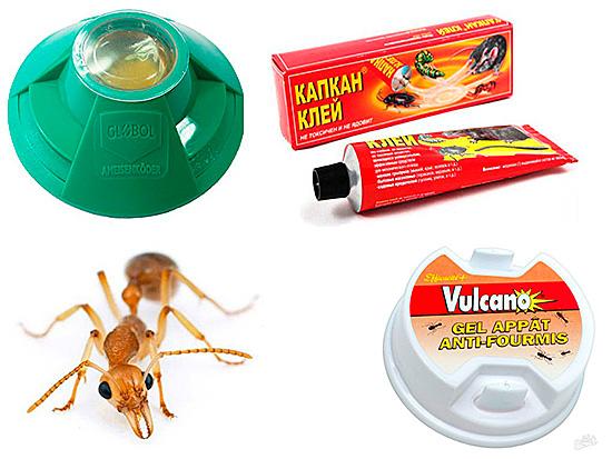 Ловушки – очень эффективный способ избавления от насекомых