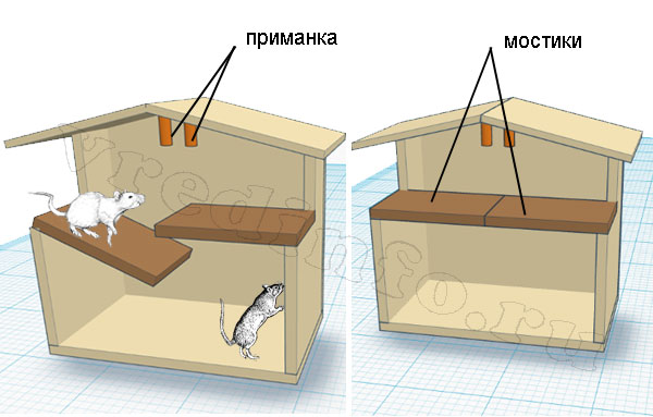 Схематичное изображение крысоловки Цюрнера