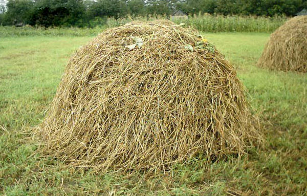 Оставленное на зиму на поле сено или солома в стогу могут стать отличным домиком для полевок