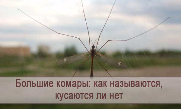 Как называются большие комары, кусаются ли нет