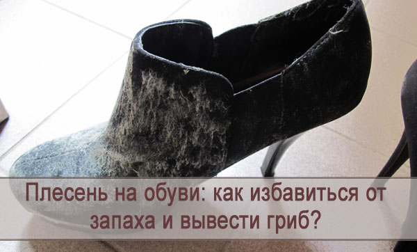 Как избавиться от плесени на обуви и от плесневого запаха